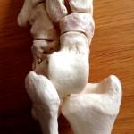 Atelier d'anatomie - ID mouvements - ©BMC à Paris (photo 5)